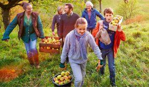 Familie erntet Äpfel