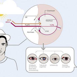 ZEISS UVProtect Infografik 3 300x300 - ZEISS-UVProtect-Infografik-3