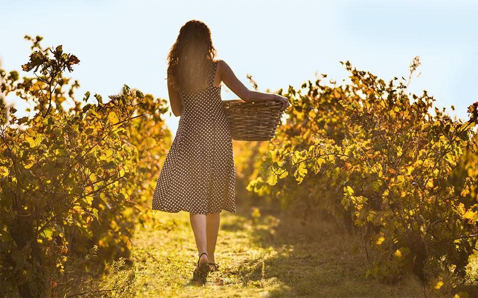 Wine Harvesting - Ein zweites Zuhause am Mittelmeer