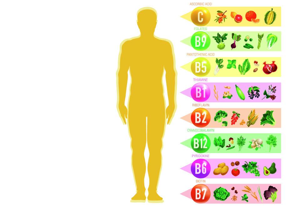 wasserloesliche Vitamine ernaehrung